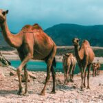 How To Travel To Oman When Pregnant
